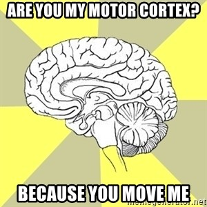 Traitor Brain - are you my motor cortex? Because you move me