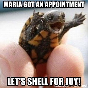 angry turtle - MARIA GOT AN APPOINTMENT LET's SHELL FOR JOY!