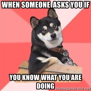 Cool Dog - when someone  asks you if  you know what you are doing