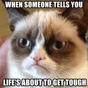 Angry Cat Meme - when someone tells you  life's about to get tough