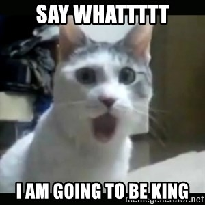 Surprised Cat - say whattttt i am going to be king
