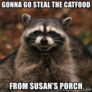 evil raccoon - Gonna go steal the catfood from Susan's porch