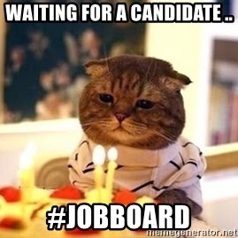 Birthday Cat - waiting for a candidate .. #jobboard