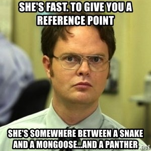 Dwight Meme - She's fast. To give you a reference point She's somewhere between a snake and a mongoose...and a panther