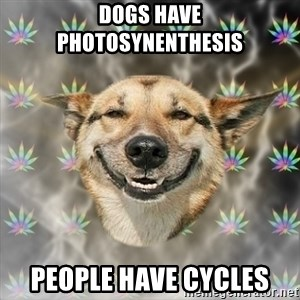 Stoner Dog - dogs have photosynenthesis people have cycles