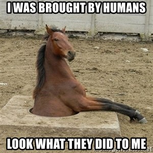 Hole Horse - I was brought by humans Look what they did to me