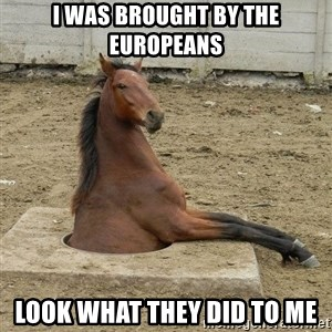 Hole Horse - I was brought by the Europeans Look what they did to me