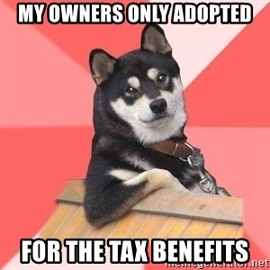 Cool Dog - My owners only adopted for the tax benefits