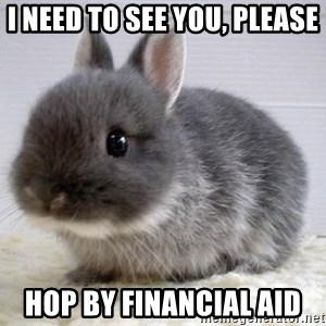 ADHD Bunny - I need to see you, please hop by financial Aid