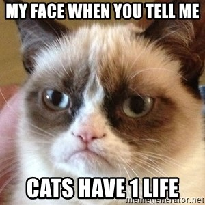 Angry Cat Meme - My face when you tell me  cats have 1 life