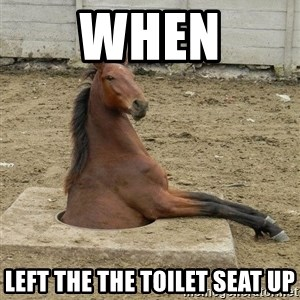 Hole Horse - when Left the the toilet seat up
