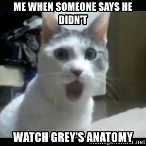Surprised Cat - Me when someone says he didn't watch Grey's Anatomy