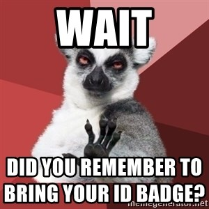 Chill Out Lemur - wait did you remember to bring your ID badge?