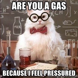 Chemistry Cat - Are you a gas  because I feel pressured