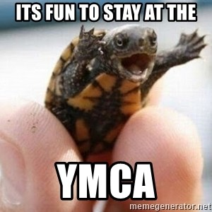 angry turtle - Its fun to stay at the YMCA