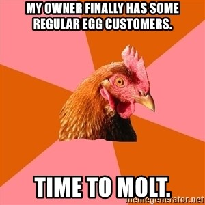 Anti Joke Chicken - My owner finally has some regular egg customers. Time to molt.