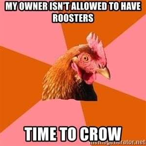 Anti Joke Chicken - My owner isn't allowed to have roosters Time to crow