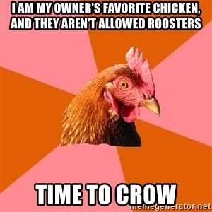 Anti Joke Chicken - I am my owner's favorite chicken, and they aren't allowed roosters Time to crow