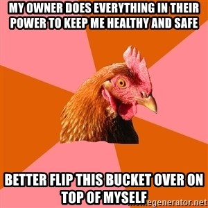 Anti Joke Chicken - My owner does everything in their power to keep me healthy and safe Better flip this bucket over on top of myself