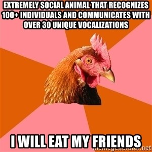 Anti Joke Chicken - Extremely social animal that recognizes 100+ individuals and communicates with over 30 unique vocalizations I will eat my friends