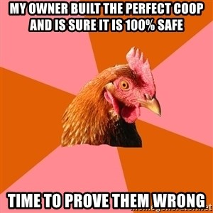 Anti Joke Chicken - My owner built the perfect coop and is sure it is 100% safe Time to prove them wrong