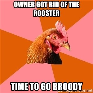 Anti Joke Chicken - Owner got rid of the rooster Time to go broody