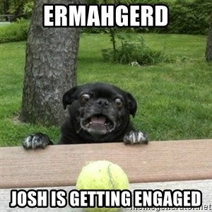 Ermahgerd Pug - ermahgerd josh is getting engaged