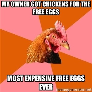 Anti Joke Chicken - My owner got chickens for the free eggs Most expensive free eggs ever