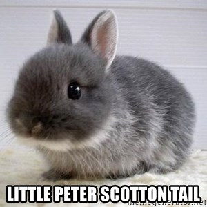 ADHD Bunny - Little Peter Scotton Tail