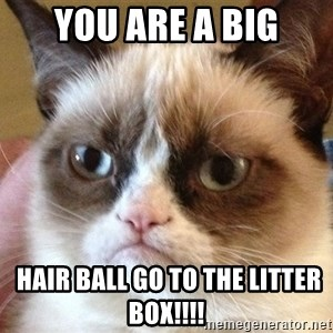 Angry Cat Meme - You are a big  hair ball go to the litter BOX!!!!