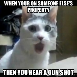 Surprised Cat - when your on someone else's property then you hear a gun shot