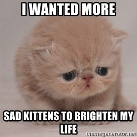 Super Sad Cat - I wanted more Sad kittens to brighten my life