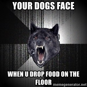 Insanity Wolf - YOUR DOGS FACE WHEN U DROP FOOD ON THE FLOOR