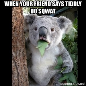 Koala can't believe it - WHEN YOUR FRIEND SAYS TIDDLY DO SQWAT