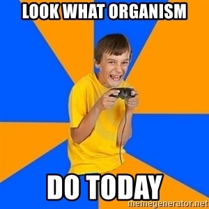 Annoying Gamer Kid - look what organism do today
