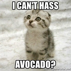 Can haz cat - I can't Hass Avocado?