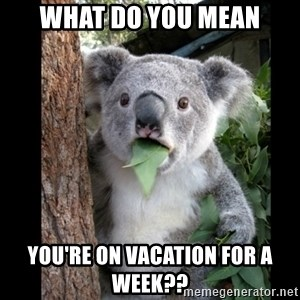 Koala can't believe it - what do you mean you're on vacation for a week??