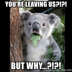 Koala can't believe it - YOU'RE LEAVING US?!?! BUT WHY...?!?!