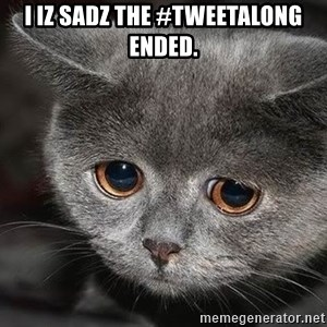 sad cat - i iz sadz the #tweetalong ended.