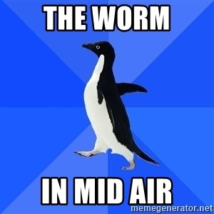 Socially Awkward Penguin - the worm  in mid air