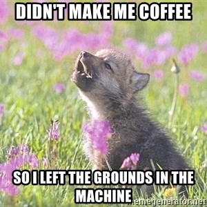 Baby Insanity Wolf - DIDN'T MAKE ME COFFEE SO I LEFT THE GROUNDS IN THE MACHINE