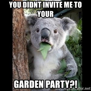 Koala can't believe it - you didnt invite me to your garden party?!
