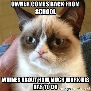 Grumpy Cat  - Owner comes back from school Whines about how much work his has to do