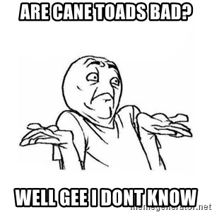 Wala talaga eh - are cane toads bad? well gee i dont know