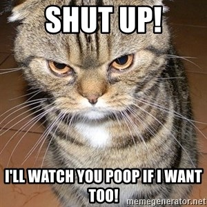 angry cat 2 - shut up! i'll watch you poop if i want too!