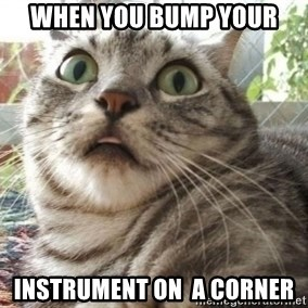 scared cat - when you bump your  instrument on  a corner