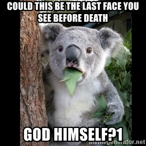 Koala can't believe it - could this be the last face you see before death god himself?1