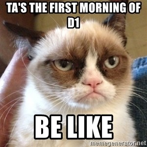 Grumpy Cat 2 - TA's the first morning of D1  BE like