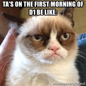 Grumpy Cat 2 - TA's on the first morning of D1 be like: