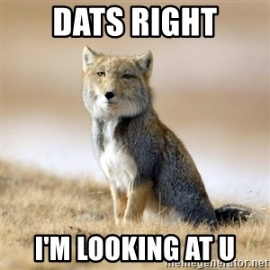 Disappointed Tibetan Fox - dats right I'm looking at u